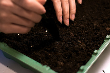 microgreens planting green farming seeds work