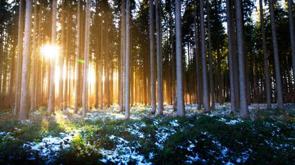 Fond de hotte en verre imprimé Coucher Sonnenuntergang im Wald
