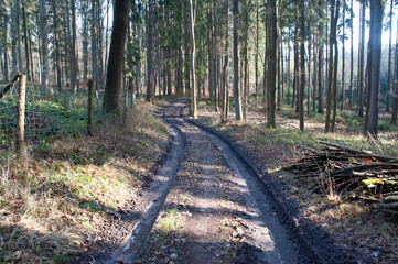 muddy road in a forrest