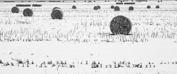 Hay Bales in the field in winter