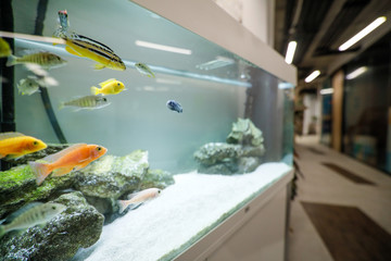 Shallow depth of field (selective focus) image with an aquarium with colorful small fish inside an office building.