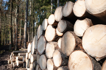 pile of logs ready for trasnport