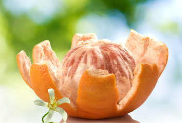 Fototapete - image of peeled grapefruit with a flower on a green blurred background