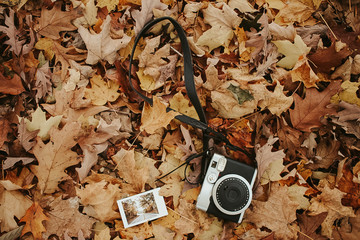 a camera and a picture on autumn leaves