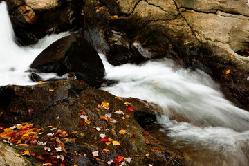Red Leafs Along a Creek, Stowe, Vermont, USA