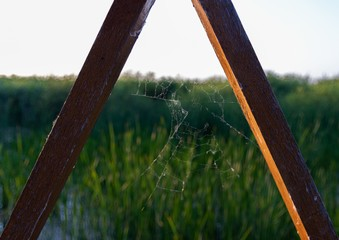 Beautiful shot of a spider web between two wooden sticks with grasses in the background