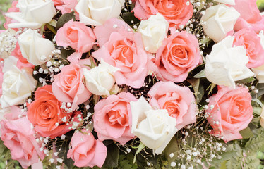 Wall Mural - Pink rose flower blossom in vintage color. flowers bouquet in wedding day, love and romantic background. flower in spring.