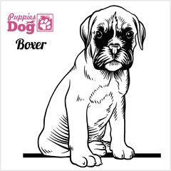 Boxer puppy sitting. Drawing by hand, sketch. Engraving style, black and white vector image.