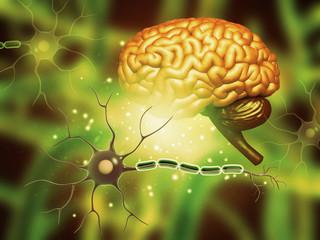 Printed kitchen splashbacks Buddha Human brain with nerve cells. 3d illustration.