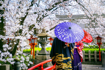 Wall Mural - Tourist wearing japanese traditional kimono and cherry blossom in spring, Kyoto temple in Japan.