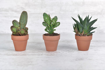 three small cactus in terra cotta pot on white table