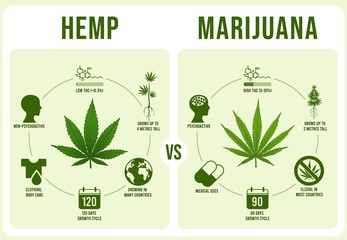 Hemp vs Marijuana infographics. Cannabis leaf, low and hight THC vector illustration. Modern banner or poster template with comparison of legal and illegal plant cultivars. Weed types distinction.
