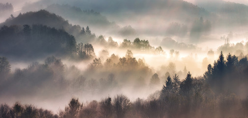 Mist in forest with sunbeam rays, Woods landscape