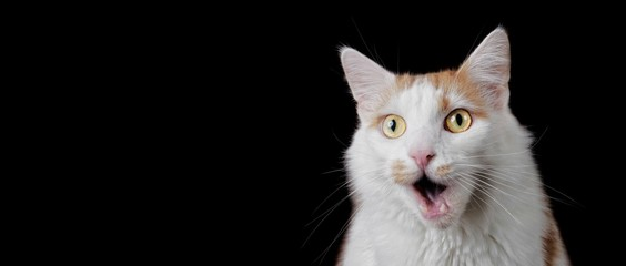 Funny tabby cat looking surprised with mouth open. Panoramic image with copyspace for your individual text.