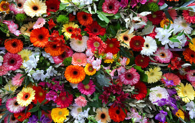 Various color gerbera flower background wall urban jungle wall