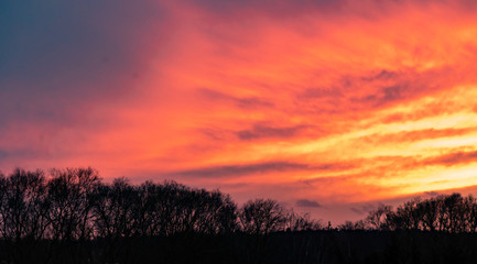 Acrylic Prints Coral Deep red sunset sky with trees silhouette
