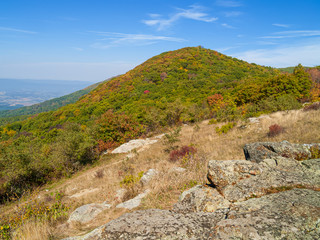 Shenandoah Autumn Hillside