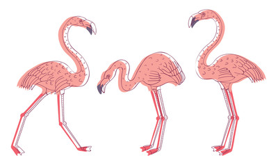 Exotic Pink Flamingos in Standing Pose and with Spread Wings Vector Set Fototapete