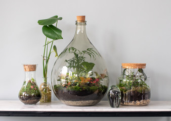 ecosystem terrarium with small plants