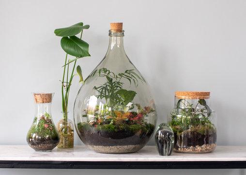 ecosystem terrarium with small plants