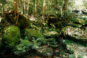 Very green lush tropical forest moss growing on stones with small water stream