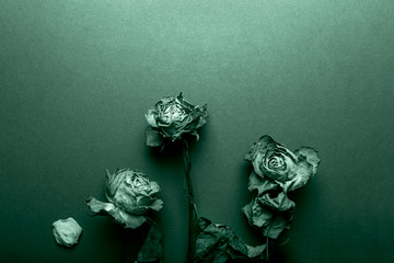 Dried orange roses, bunch of beautiful faded flowers on blue background, top view, copy space, toned in green color