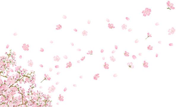 桜吹雪_1