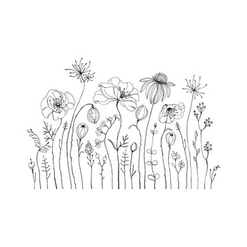 Hand drawn wildflowers and poppies. Decorative vector set in doodle style for your template.