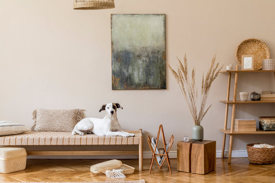 Modern composition of living room with furnitures, mock up paintings, rattan decoration, bamboo shelf with elegant personal accessories. Beautiful dog lying on the chaise longue. Home decor Template