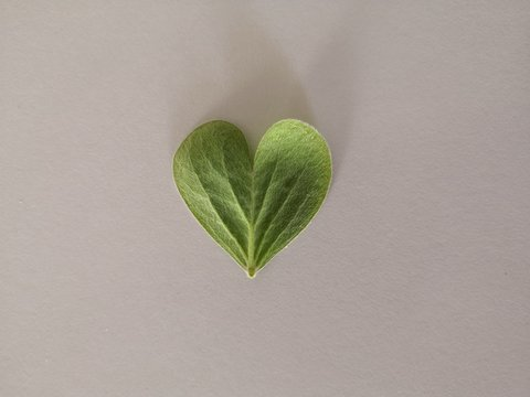 green heart on leaf
