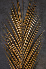 Closeup of golden palm leaf on abstract dark grey textured background. Tropical conceptual luxury elegant trendy art deco summer background. Flat lay. Symmetric composition