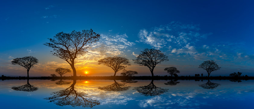 Panorama silhouette tree in africa with sunset.Tree silhouetted against a setting sun reflection on water.Typical african cool light sunset with acacia trees in Masai Mara, Kenya.