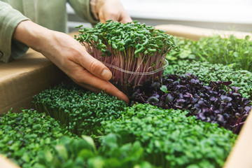 organic raw food - woman take a microgreens container out of cardboard box Papier Peint
