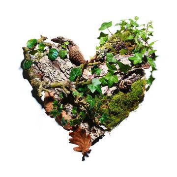 Amour de la nature et des arbres avec des plantes vivantes et écorces,  mousse,  pommes de pin, feuilles de chêne, lierre en forme de coeur, reforestation et réchauffement climatique, environnement