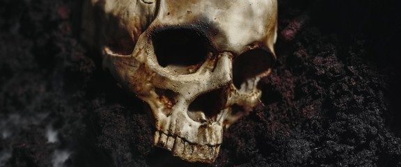 Skull of a dead man in on the ground