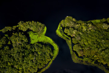 Amazon rainforest seen from above reveals the beauty of its rivers, trees and animals. Pará, Brazil Wall mural