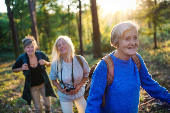 Senior women friends with camera walking outdoors in forest.