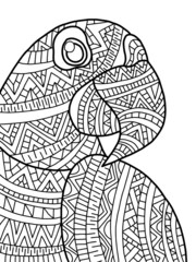 Animal Coloring Page: Macaw by Megan Nedds   Teachers Pay Teachers   240x180