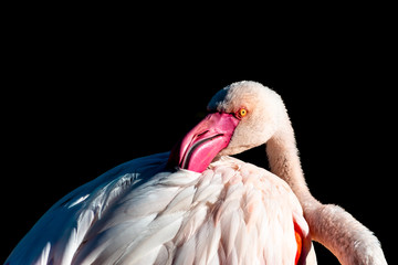 Light, shadows and position help to take this picture of a flamingo. With his posture and the position of his eyes make this a very intriguing and elegant bird.