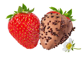 Fototapete - strawberry in chocolate isolated on the white background