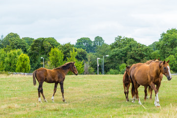 Horses and Foal on Meadow