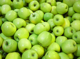 Fresh picked green apples background in the harvest season