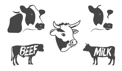 Vector set of illustrations of a cow's head and the silhouette of the beef, milk cow