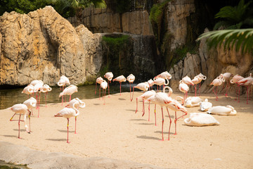The picture of pink flamingo in a zoo