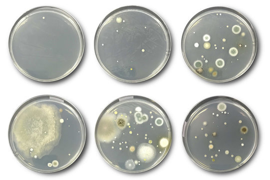 Bacteria on agar plate isolated from air