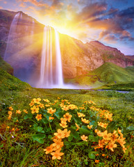 Foto op Textielframe Watervallen Incredible sunset on Seljalandsfoss. One of the most beautiful waterfalls on the Iceland, Europe. Popular and famous tourist attraction summer holiday destination in on South Iceland. Travel postcard