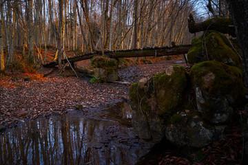 Wooden bridge in the autumn forest.