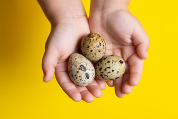 Girl holding Easter quail eggs, handful of quail eggs. They are rich in protein and micro-nutrients.