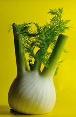 a single fresh bulb of a fennel