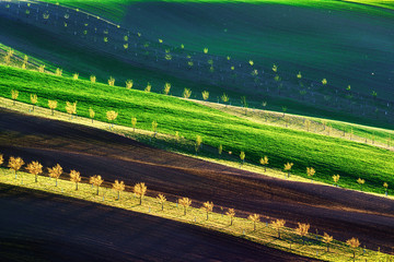 Green, brown and yellow waves of the agricultural fields of South Moravia, Czech Republic. Rural spring landscape with colored striped hills with trees. Can be used like nature background or texture